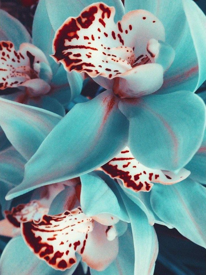3b3ec80e0f26dcb06e971ce514eb17eb--blue-orchids-orchid-flowers.jpg