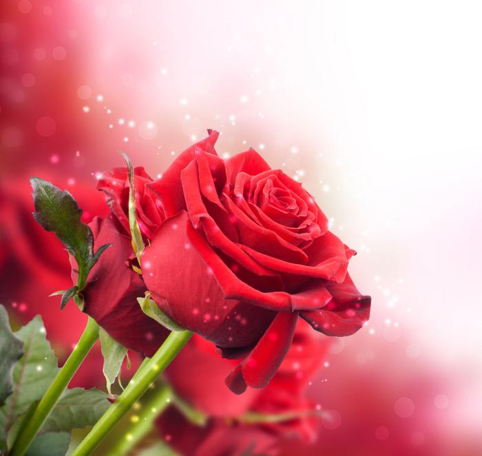 98516663_Roses_mix__4_.jpg