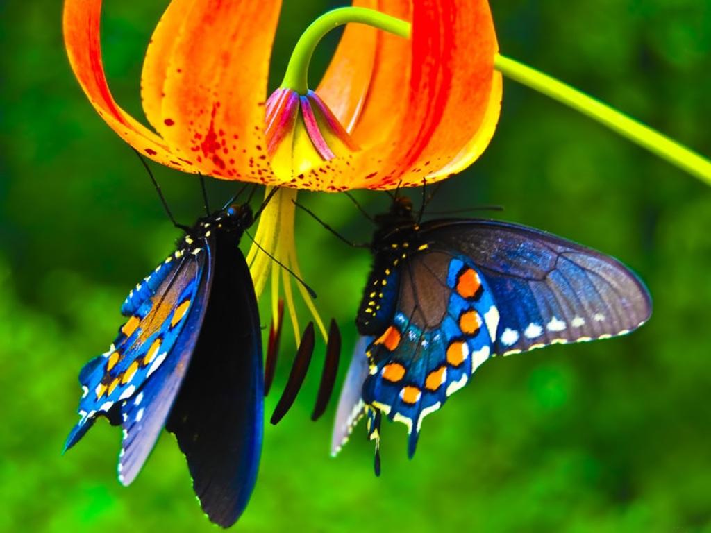 birthday-butterflies.jpg