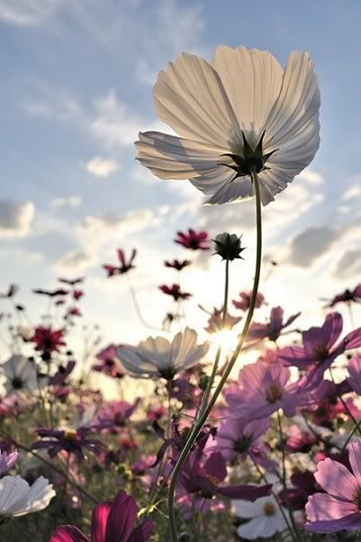 flowers-tumblr-flowers-33623947-401-602.jpg