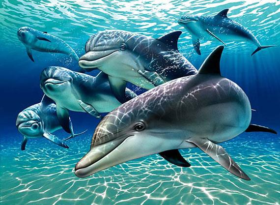 sunlit_dolphin_pals_1A.jpg