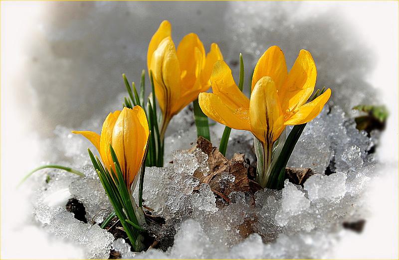 весна2.jpg