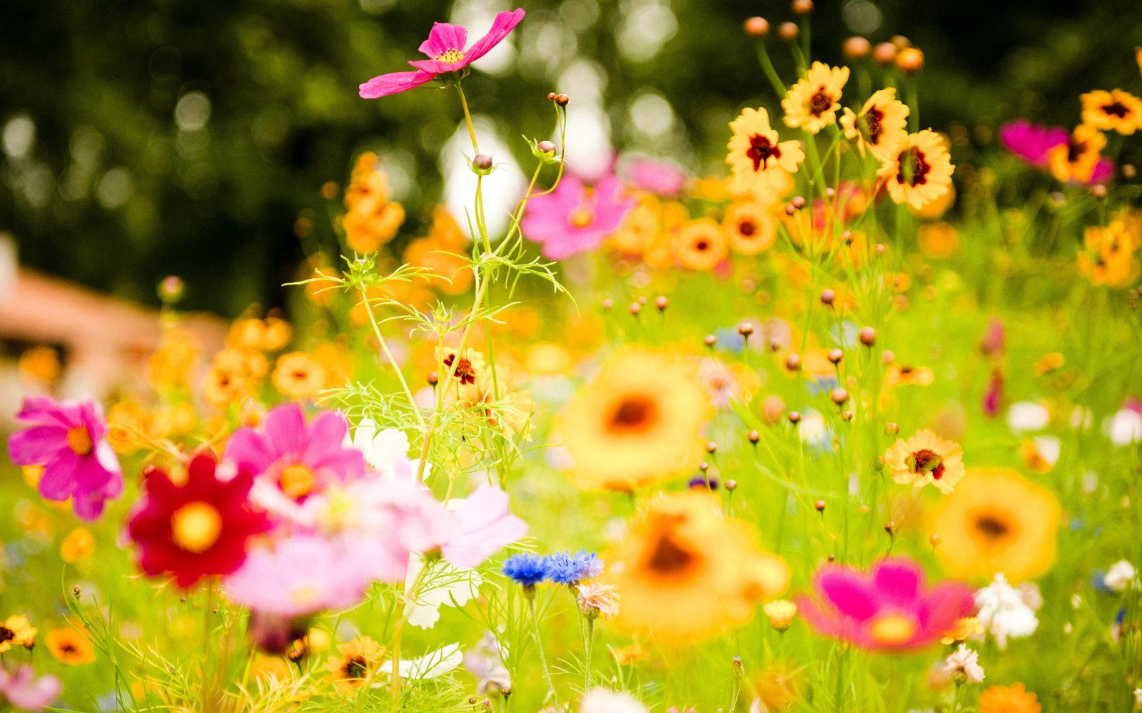 vivid_flowers-wide.jpg