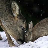 Dear-Deer